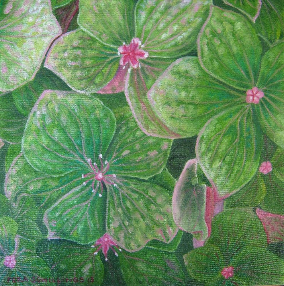 """Green Hydrangea"" original fine art by Pera Schillings"