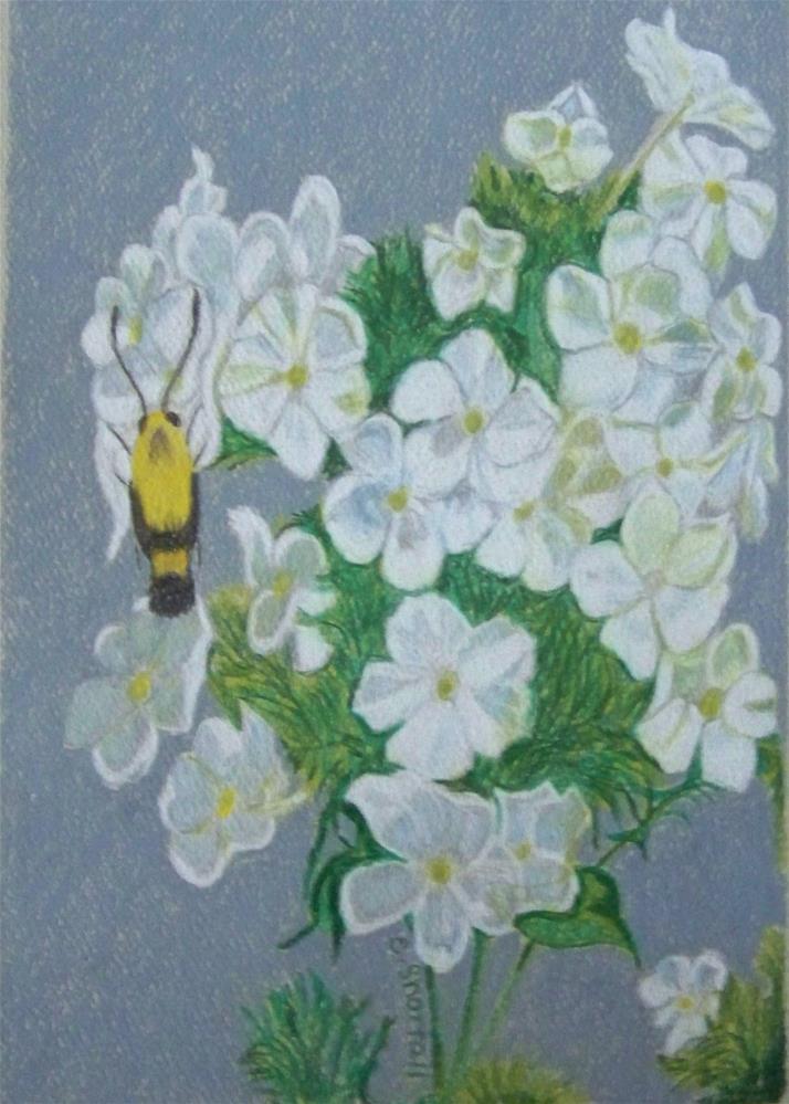 """Tall Phlox with Hummingbug"" original fine art by Elaine Shortall"