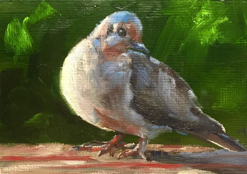 """Sunlit Dove"" original fine art by Gary Bruton"