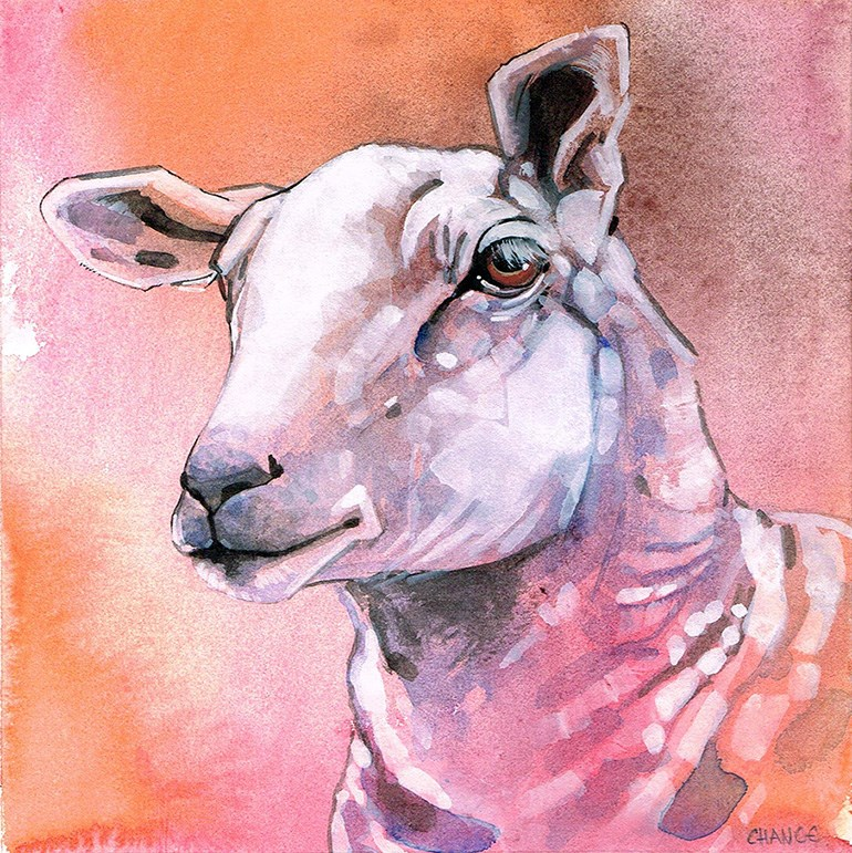 """No. 39 Sheep"" original fine art by Annabel Chance"