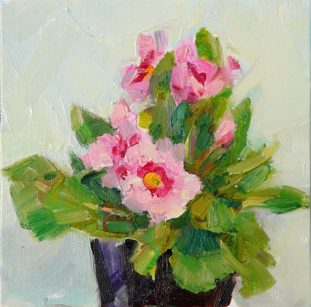 """Pink Primrose,still life,oil on canvas,6x6,price$200"" original fine art by Joy Olney"