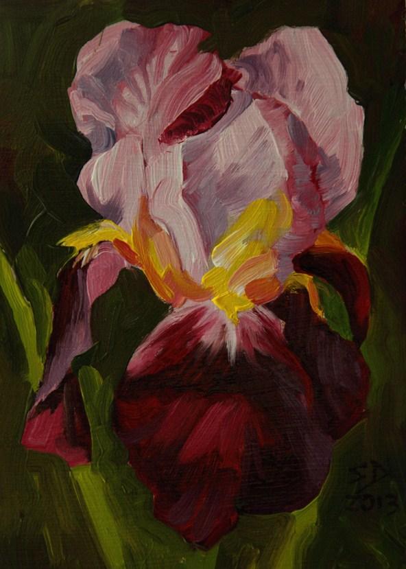 """""""Iris 130304"""" original fine art by Sue Deutscher"""
