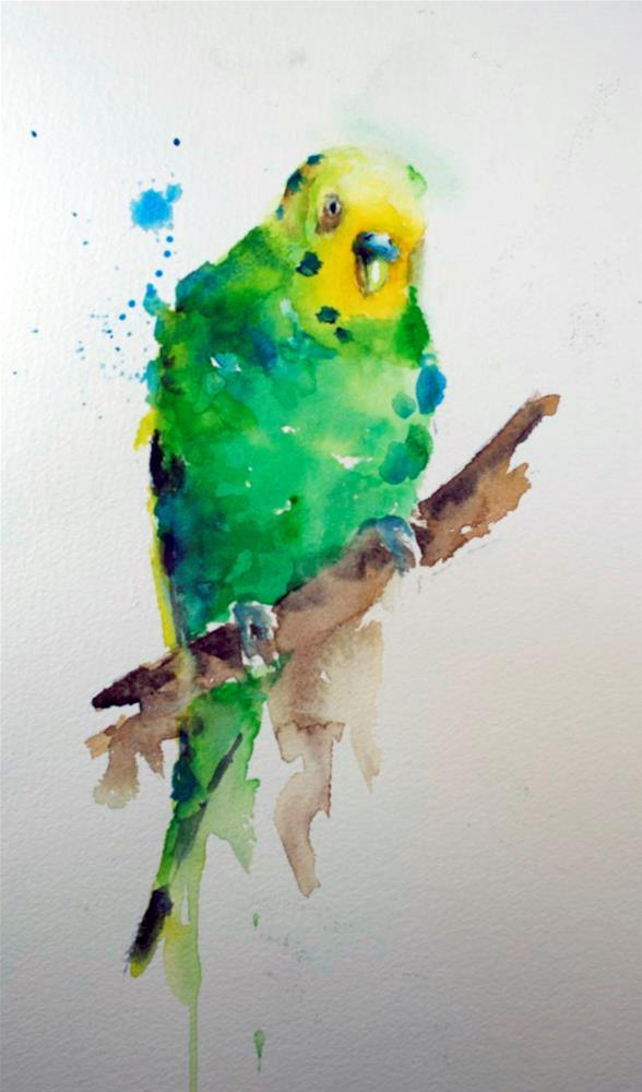 """Budgie Study #1"" original fine art by Sue Churchgrant"