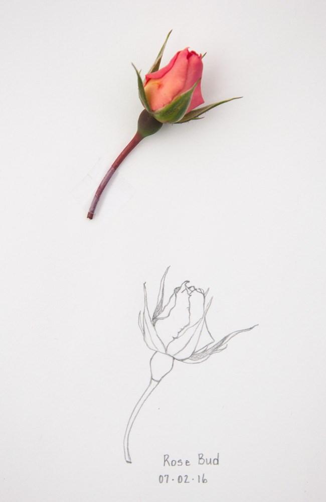 """Anniversaries and Rose Bud"" original fine art by Debbie Lamey-Macdonald"