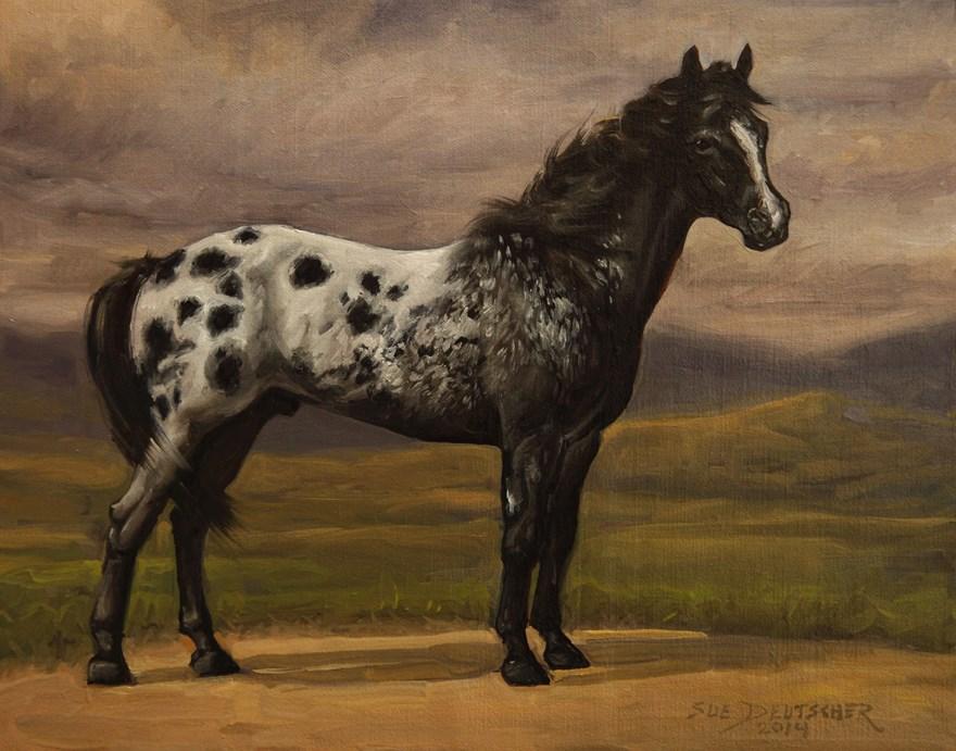 """""""Appaloosa"""" original fine art by Sue Deutscher"""
