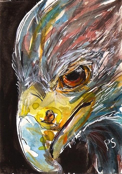 """""""ACEO Eagle Eye Head Shot Bird Beak Illustration Art WC Painting Penny StewArt"""" original fine art by Penny Lee StewArt"""