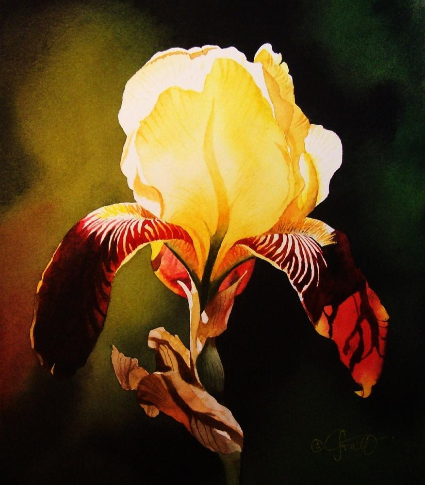 """Yellow & Burgundy Iris"" original fine art by Jacqueline Gnott, whs"