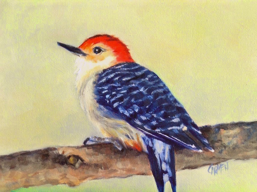 """Red-Bellied Woodpecker, 8x6 Oil on Canvas, Bird Painting"" original fine art by Carmen Beecher"