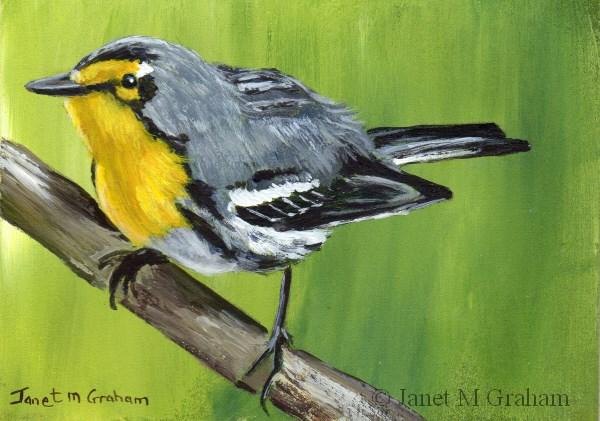 """Grace's Warbler ACEO"" original fine art by Janet Graham"