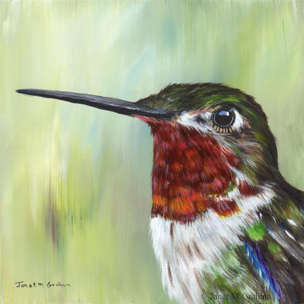 """Broad Tailed Hummingbird"" original fine art by Janet Graham"