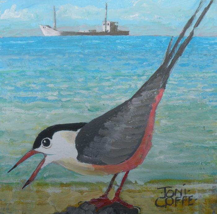 """""""Roseate Tern"""" original fine art by Toni Goffe"""
