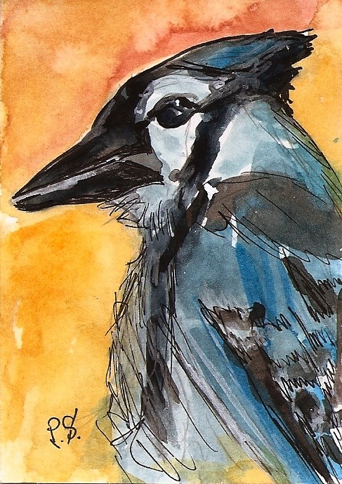 """ACEO Blue Jay Bird Art Illustration Painting Original Watercolor by Penny StewArt"" original fine art by Penny Lee StewArt"