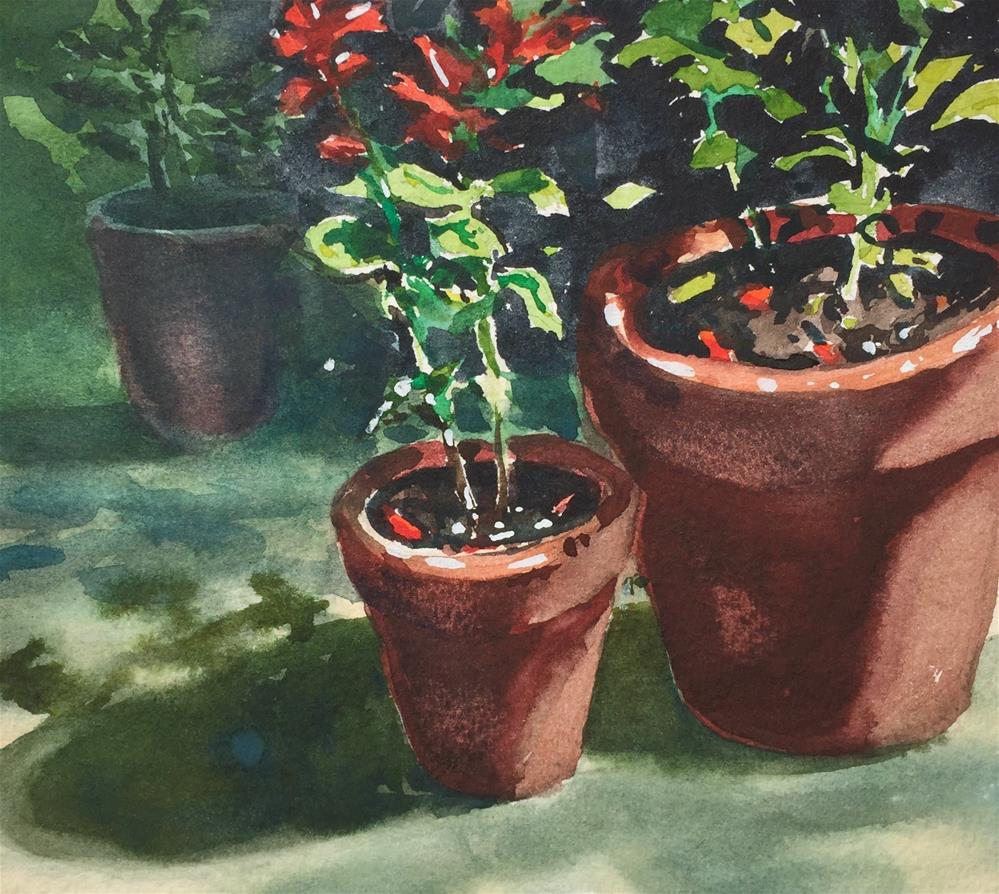"""""""Salvias in Terracotta"""" original fine art by Laurie Maher"""