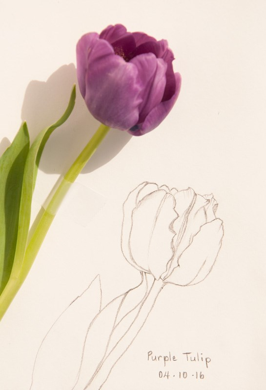 """Daily Sketch: Purple Tulips"" original fine art by Debbie Lamey-Macdonald"