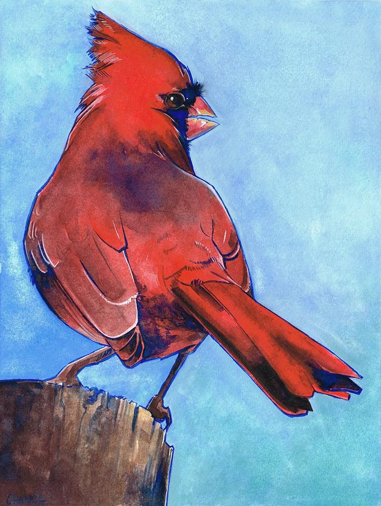 """""""Cardinal"""" original fine art by Annabel Chance"""