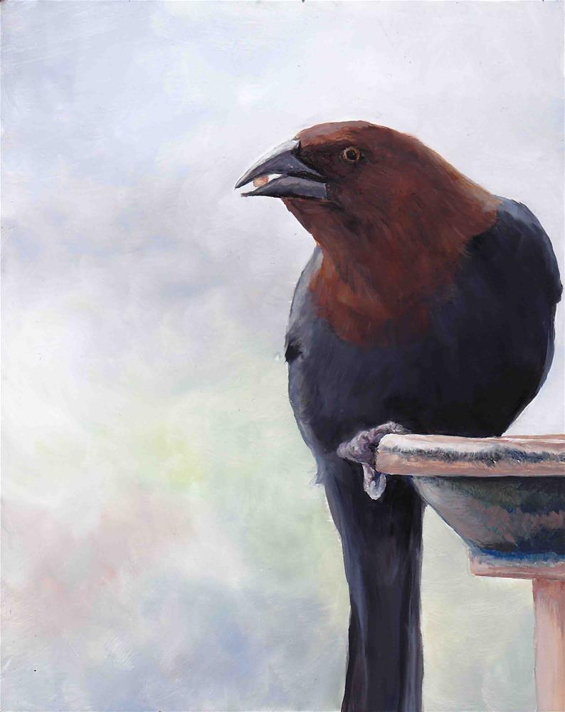 """""""Cow Bird"""" original fine art by Charlotte Yealey"""