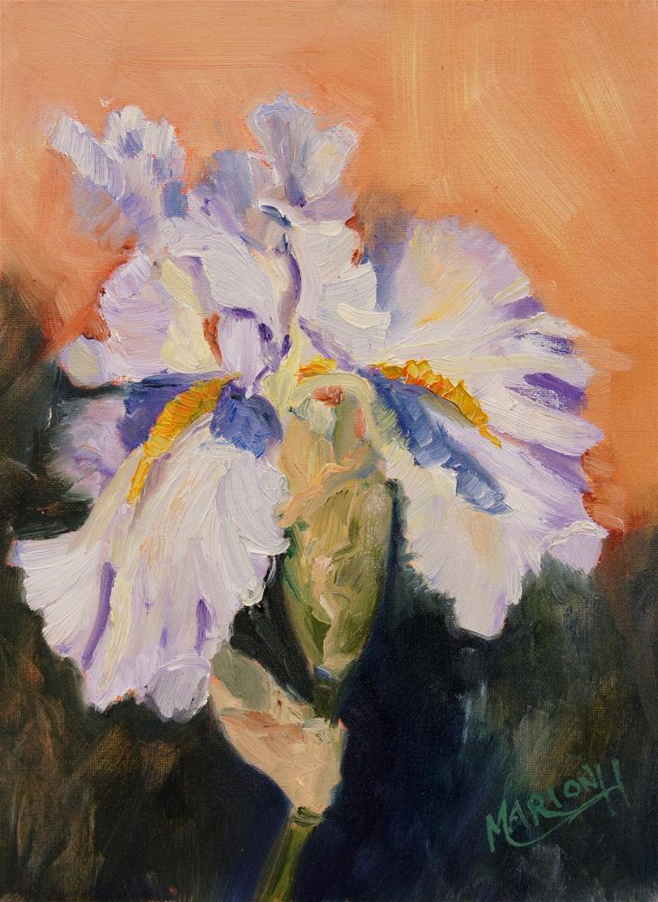 """White Ice Bearded Iris in oils"" original fine art by Marion Hedger"