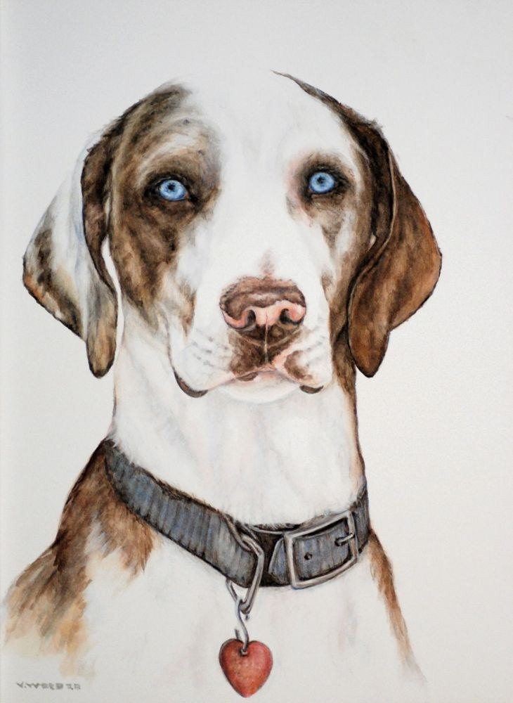 """Rufus, the Catahoula"" original fine art by Vicki Wood"