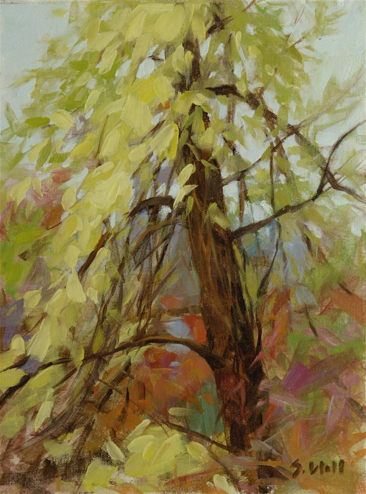 """Illumined Tree Study 12x9"" original fine art by Sharon Will"