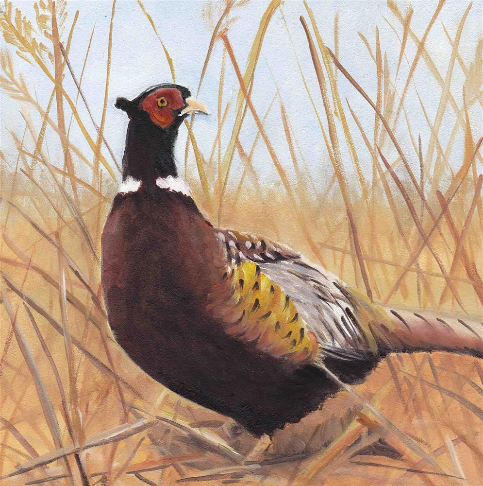 """Lone Pheasant"" original fine art by Charlotte Yealey"