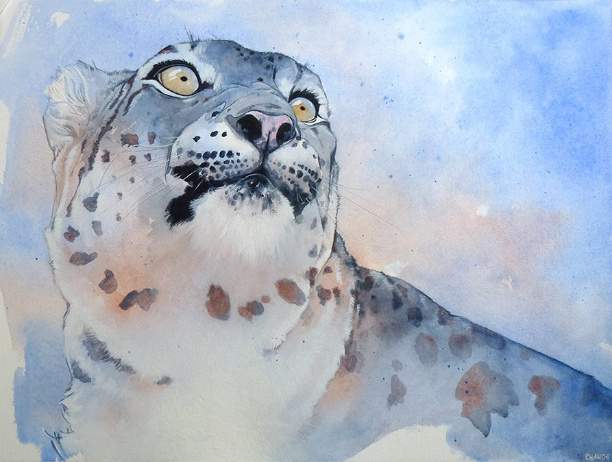 """Snow Leopard"" original fine art by Annabel Chance"