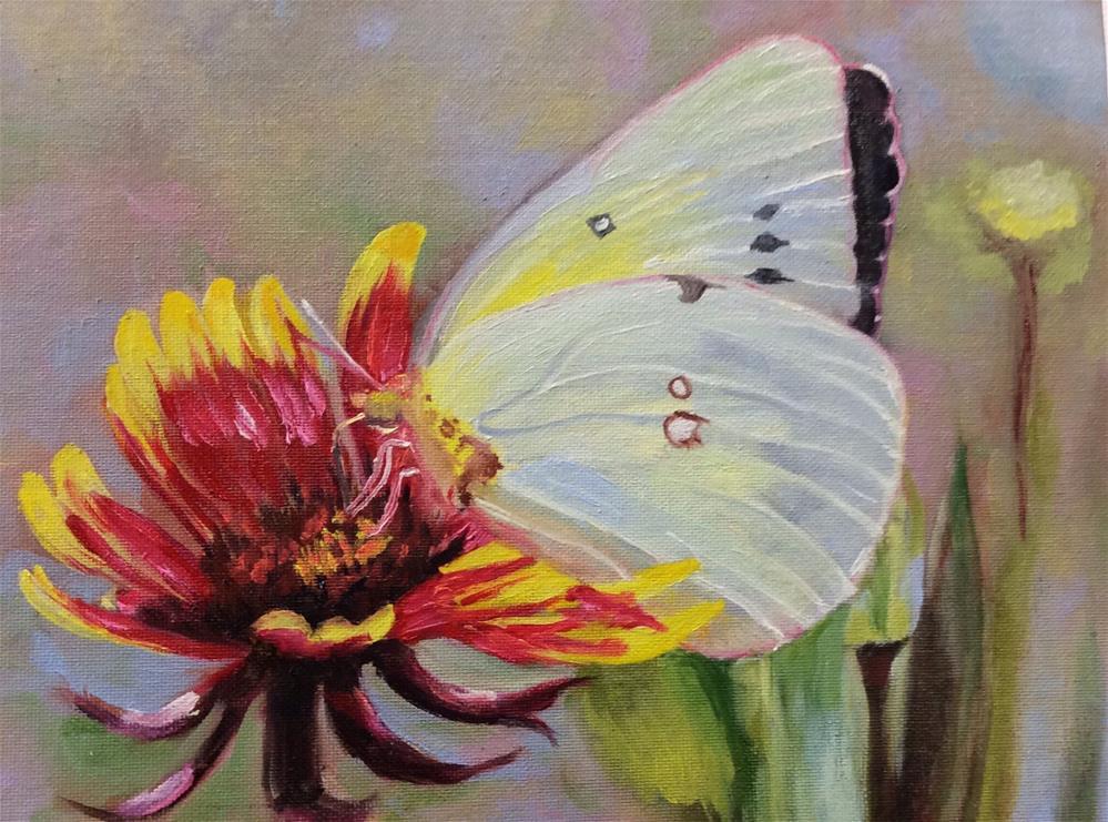 """Sulphur Butterfly"" original fine art by Charlotte Lough"