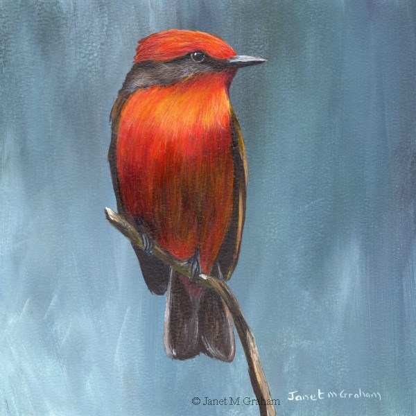 """Vermilion Flycatcher No 2"" original fine art by Janet Graham"