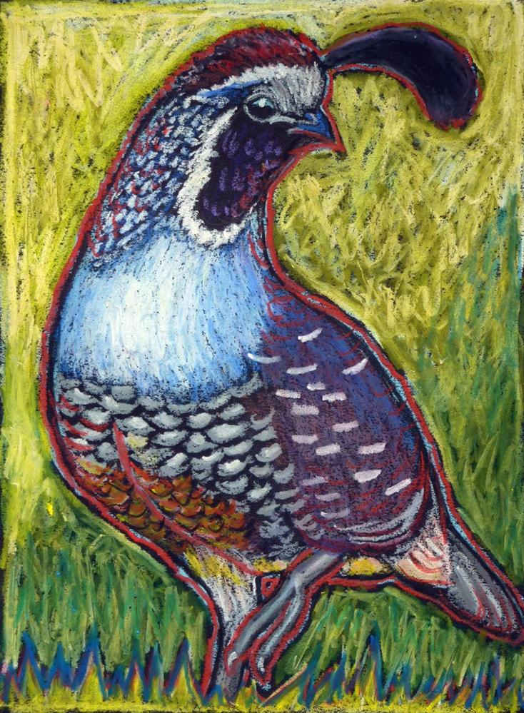 """California Quail King"" original fine art by Ande Hall"