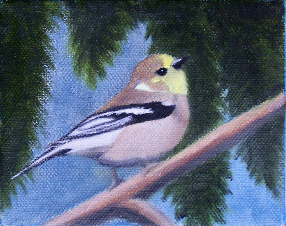 """Little finch on a limb"" original fine art by John Marcum"