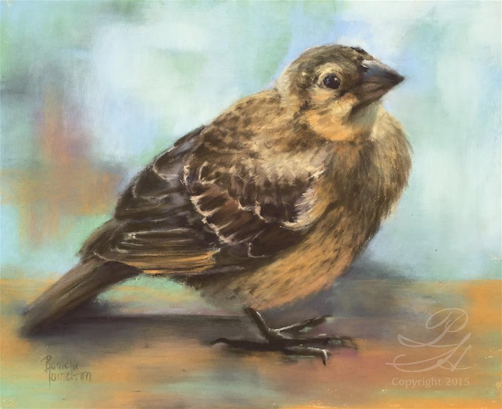 """Fledgling"" original fine art by Pamela Hamilton"