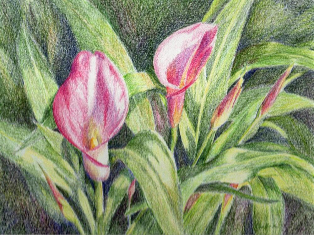 """Callas - January Studio Sale"" original fine art by Vikki Bouffard"