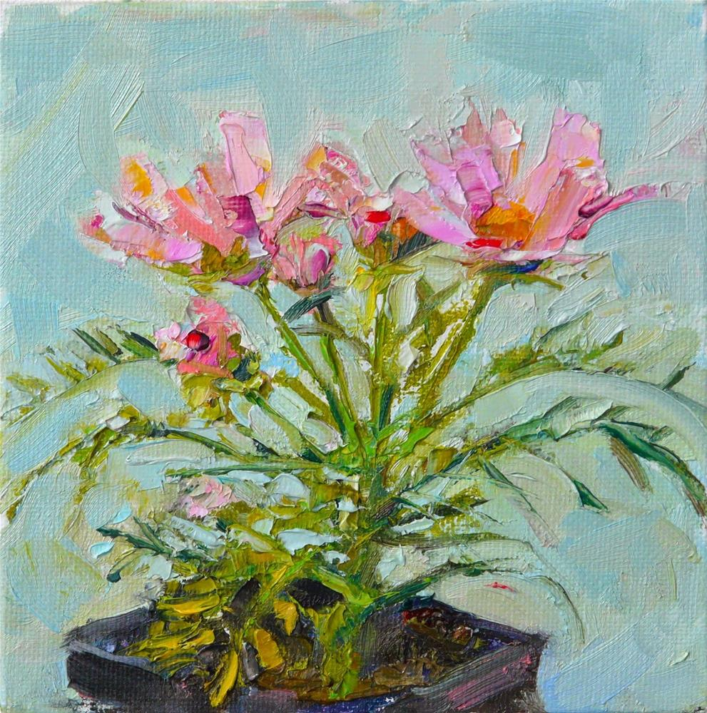 """Cosmos,still life,oil on canvas,6x6,price$175"" original fine art by Joy Olney"