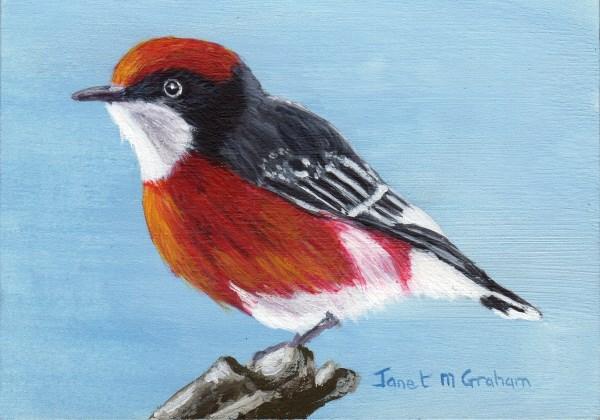 """Crimson Chat ACEO"" original fine art by Janet Graham"