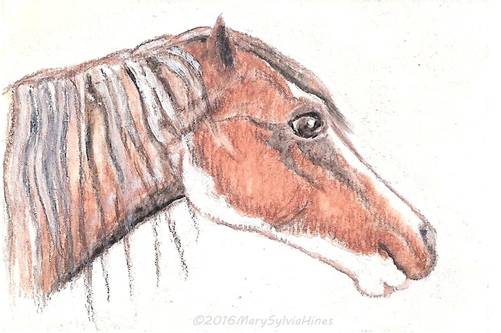 """ACEO Brown Horse v1"" original fine art by Mary Sylvia Hines"