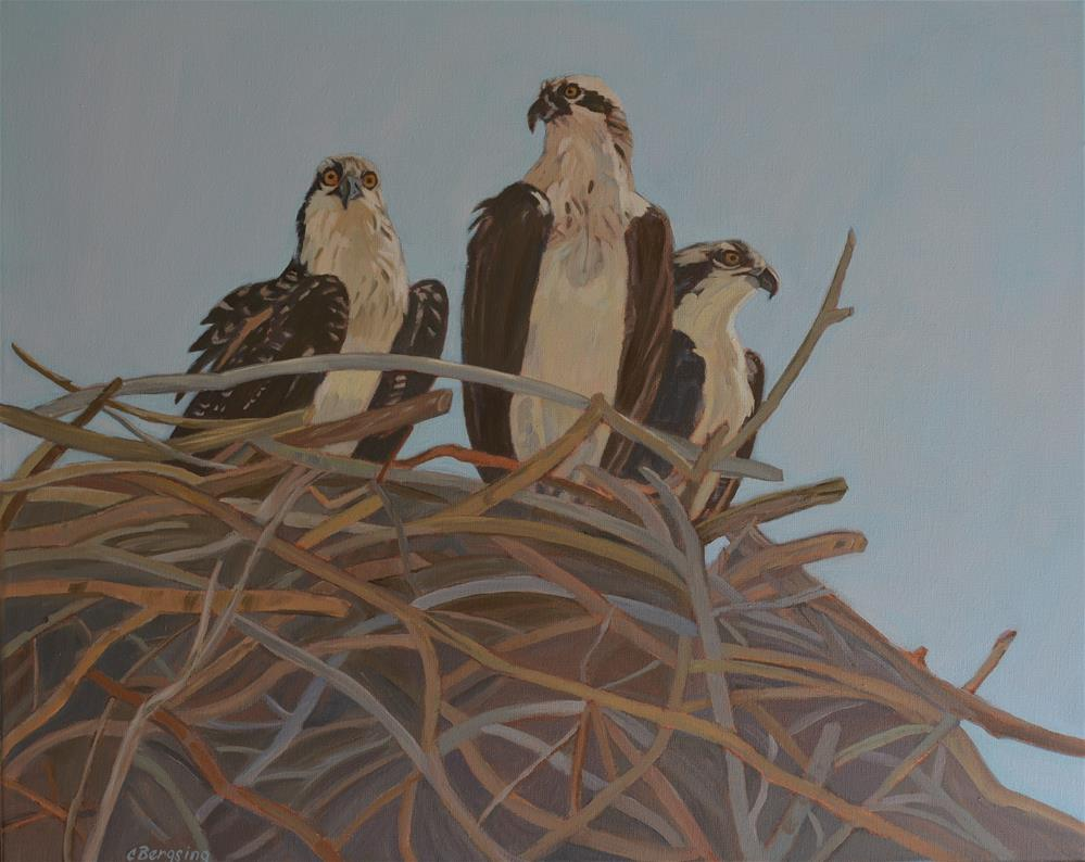 """Young Ospreys"" original fine art by Cathy Bergsing"