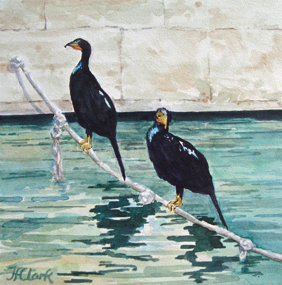 """San Antonio Cormorants"" original fine art by Judith Freeman Clark"