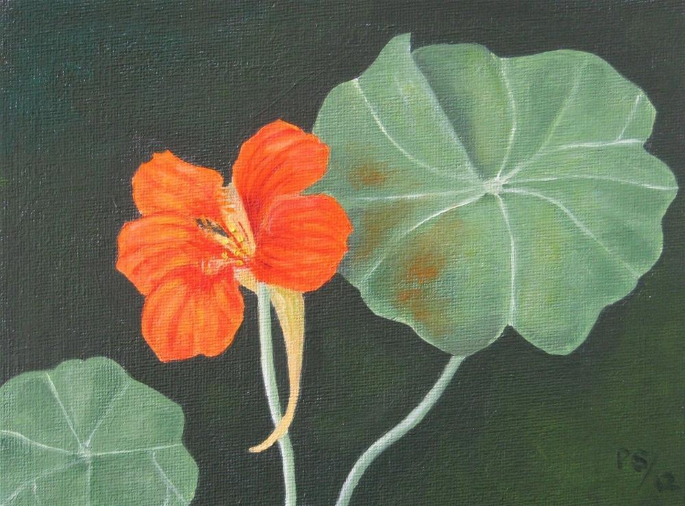 """Another Nasturtium"" original fine art by Pera Schillings"