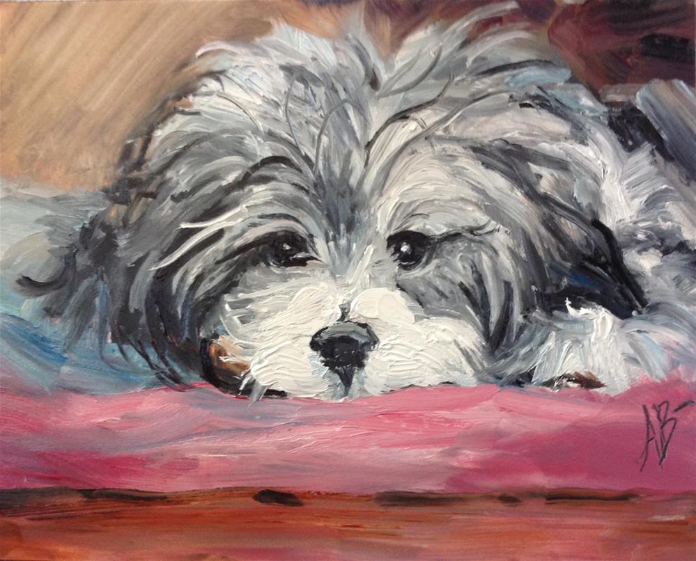 """""""Havanese Sweetheart"""" original fine art by Annette Balesteri"""