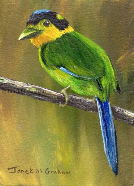 """Long Tailed Broadbill ACEO"" original fine art by Janet Graham"