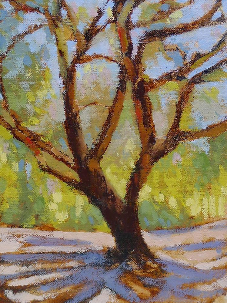 """Oak at Sutter's Mill"" original fine art by Adam Houston"