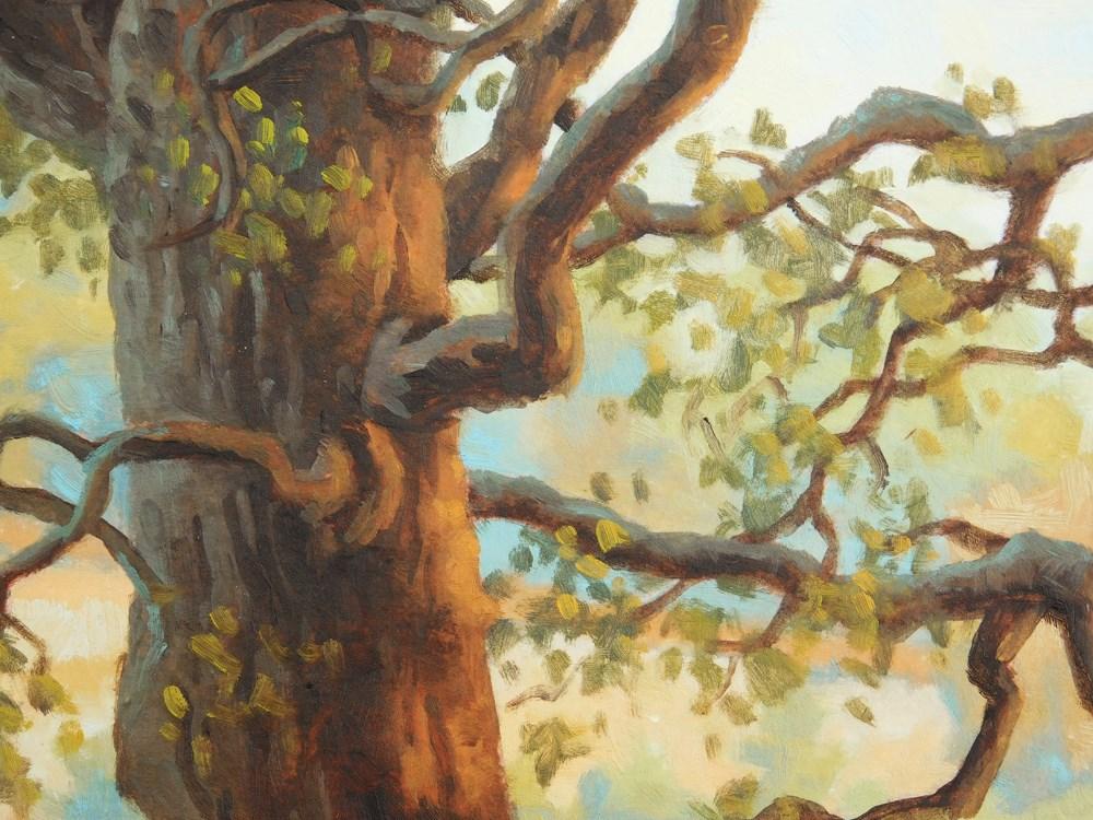 """Conservancy Oaks"" original fine art by Les Dorscheid"