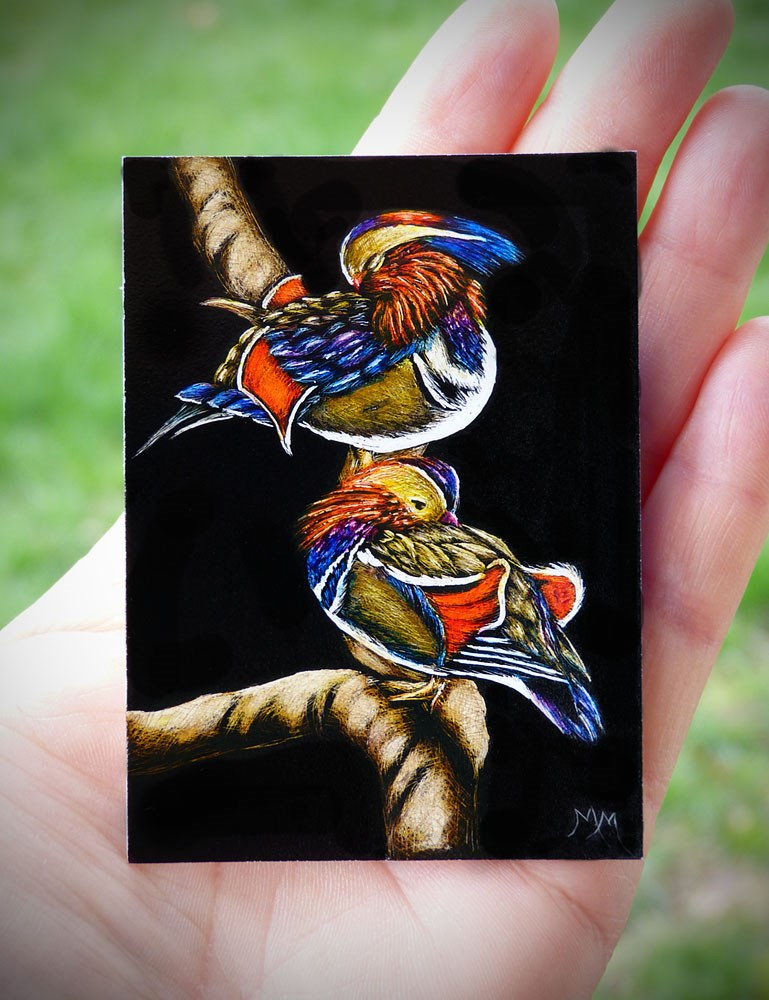 """Mandarin Ducks - SA106"" original fine art by Monique Morin Matson"