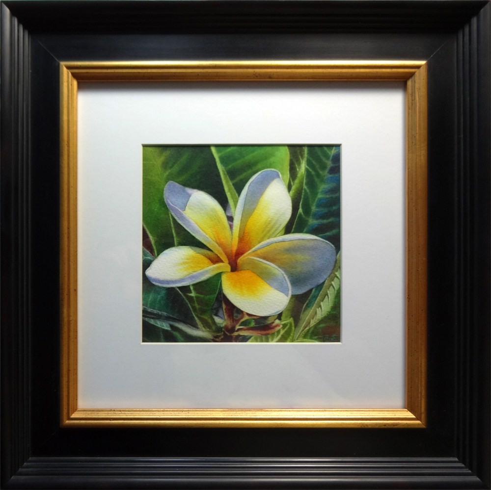"""Island Beauty - White Plumeria"" original fine art by Arena Shawn"