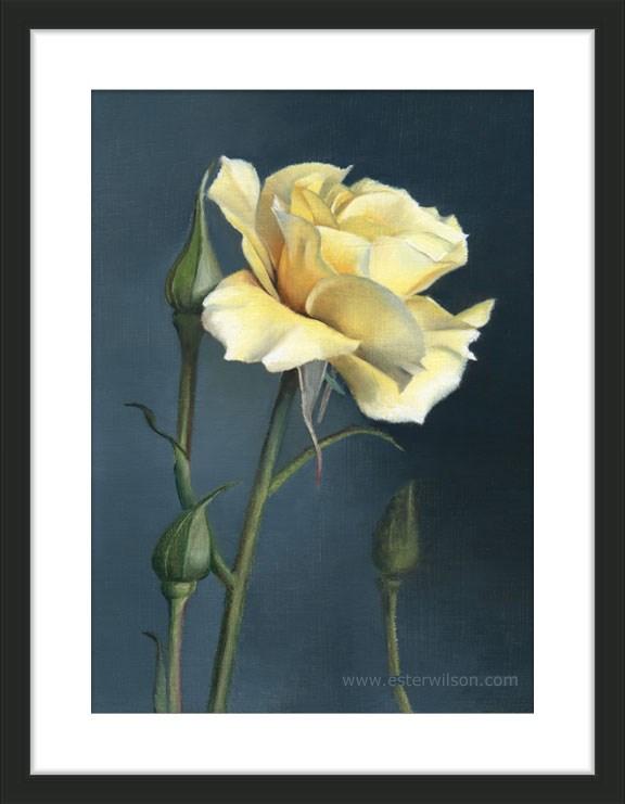 """Yellow Rose"" original fine art by Ester Wilson"