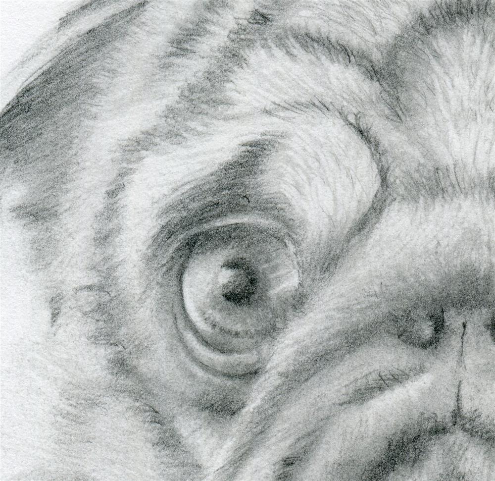 """That Pug Look"" original fine art by Paulette Farrell"