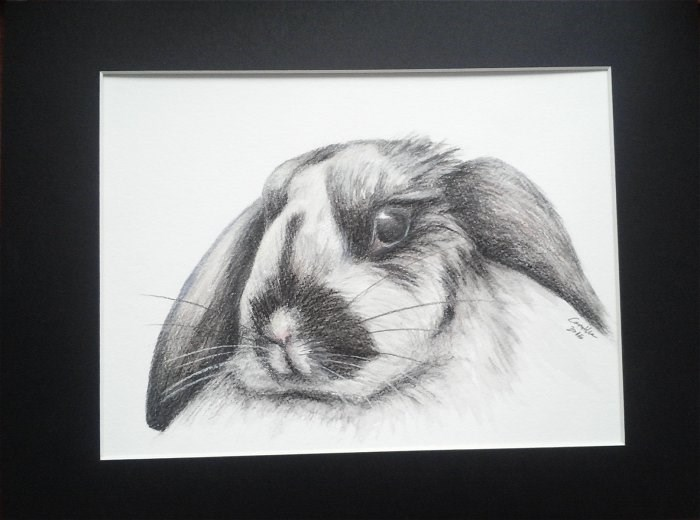 """Bunny Watercolor Pencil Drawing"" original fine art by Camille Morgan"