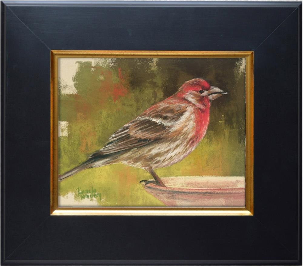 """House Finch"" original fine art by Pamela Hamilton"