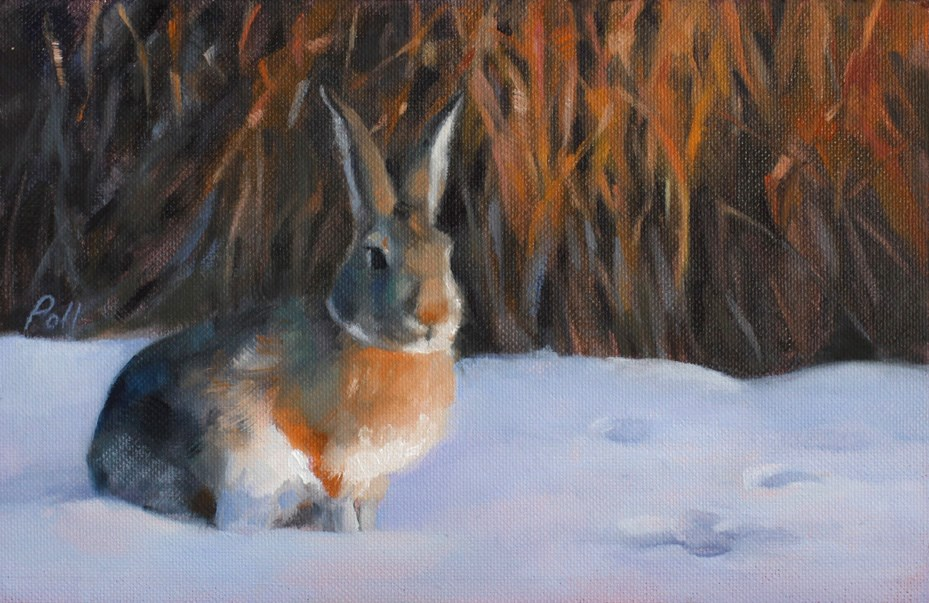 """Sundown Cottontail (framed)"" original fine art by Pamela Poll"