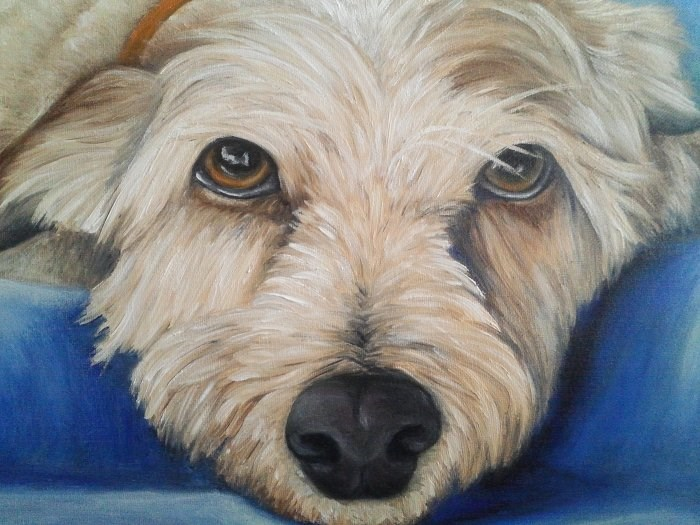"""Pet Portrait Yorkie"" original fine art by Camille Morgan"