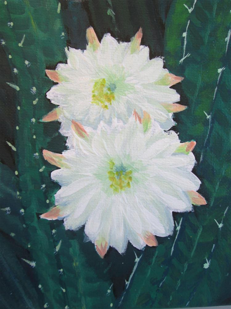 """Apple Cactus Flower"" original fine art by Chris MacCormack"